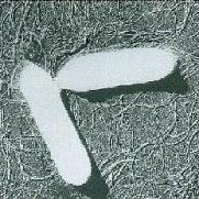ボツリヌス菌